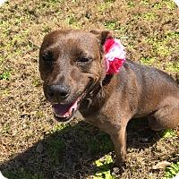 Adopt A Pet :: Lizzie - Tallahassee, FL