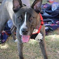 Adopt A Pet :: Pup (courtsey listing) - Wichita Falls, TX