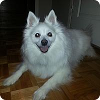 Adopt A Pet :: Pixie - Rigaud, QC