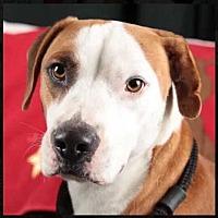 Adopt A Pet :: Bevo - Sidney, NE