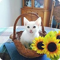 Adopt A Pet :: Ervin - Seaford, DE