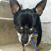 Adopt A Pet :: Chico - Baltimore, MD