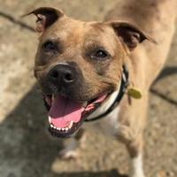 Mixed Breed (Large) Mix Dog for adoption in Charleston, West Virginia - Rupert