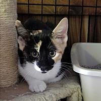 Adopt A Pet :: Magnolia - Bronx, NY