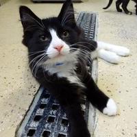 Adopt A Pet :: Smuckers - Belleville, MI
