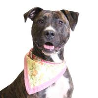 Adopt A Pet :: Cyndi Lauper- Sponsored by Carter Bynoe-Cester - Chico, CA