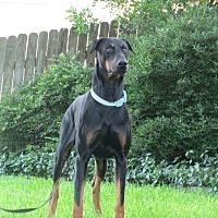 Adopt A Pet :: Gunnar - Fort Worth, TX