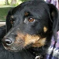 Adopt A Pet :: Max - Wymore, NE