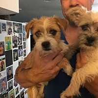 Adopt A Pet :: Sonny&Cher - Tempe, AZ