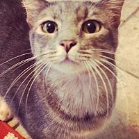 Adopt A Pet :: Yumi - San Antonio, TX