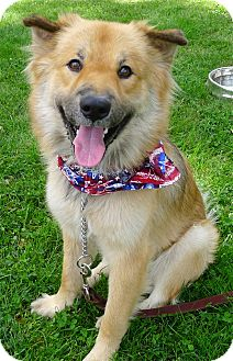 Chow Chow/Shepherd (Unknown Type) Mix Dog for adoption in Sacramento, California - Codiak gd w kids, cats, dogs
