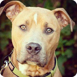 Terrier (Unknown Type, Medium) Mix Dog for adoption in Atlanta, Georgia - Tyson