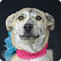 Adopt A Pet :: Oprah Winfrey - Plano, TX