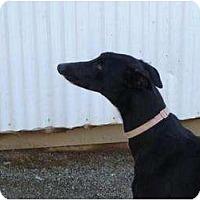 Adopt A Pet :: Cody (Sky Venture) - Chagrin Falls, OH