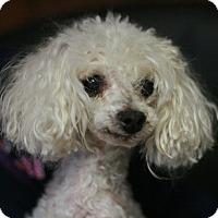 Adopt A Pet :: Buddy - Canoga Park, CA