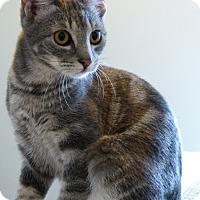 Adopt A Pet :: Amanda - Portland, OR