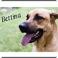 Adopt A Pet :: Bettina - El Cajon, CA