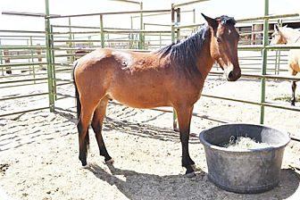 Mustang Mix for adoption in Lancaster, California - Eyota