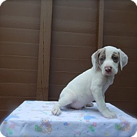 Adopt A Pet :: Ford - available 6/28 - Sparta, NJ