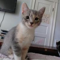 Adopt A Pet :: Victorine 2 - Baltimore, MD