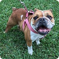 Adopt A Pet :: June - Katy, TX