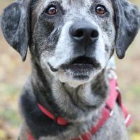 Adopt A Pet :: Patches - Williamsburg, VA