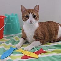 Adopt A Pet :: Lightning FE1-9559 - Thibodaux, LA