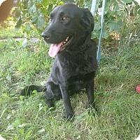 Adopt A Pet :: Jade *Pending* - Logan, UT