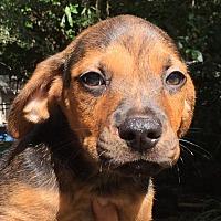 Adopt A Pet :: Mich#4M - Orlando, FL