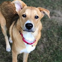 Adopt A Pet :: Ricky ~ meet me! - Southbury, CT