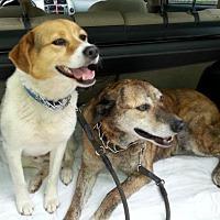 Adopt A Pet :: Scooby and Swirls - Trenton, NJ