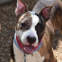 Adopt A Pet :: Justin - Philadelphia, PA