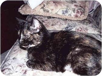 Domestic Shorthair Cat for adoption in Owatonna, Minnesota - Bella