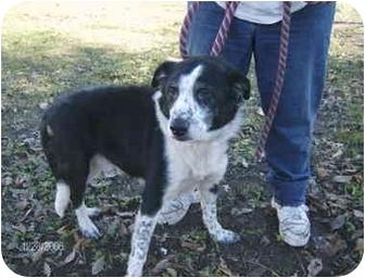 Labrador Retriever Mix Dog for adoption in Sacramento, California - Freckles - URGENT!