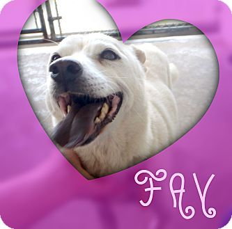 Terrier (Unknown Type, Small) Mix Dog for adoption in Beaumont, Texas - Fay