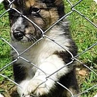 Adopt A Pet :: Alura - Jarrettsville, MD