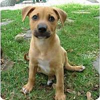 Adopt A Pet :: Hank - Fort Lauderdale, FL