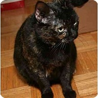 Adopt A Pet :: Tiger Lily - Cincinnati, OH