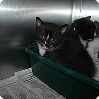 Adopt A Pet :: Cat E006 - Rocky Mount, NC