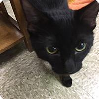 Adopt A Pet :: Vader - Medina, OH