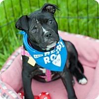 Adopt A Pet :: Elle - Franklin, VA