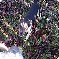 Adopt A Pet :: Jacob - Kendall, NY