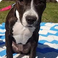 Adopt A Pet :: Agnes-Adopted! - Detroit, MI