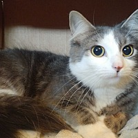 Adopt A Pet :: Brieland - Baltimore, MD