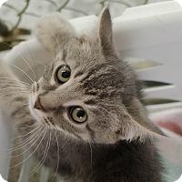 Adopt A Pet :: Stella - Greenwood, SC