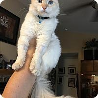 Adopt A Pet :: Pretty Boy - Oakdale, CA