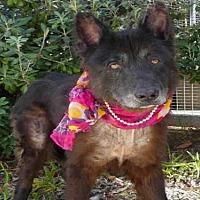 Adopt A Pet :: BLACKIE - San Pedro, CA