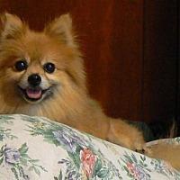 Adopt A Pet :: Cami - Rayville, LA