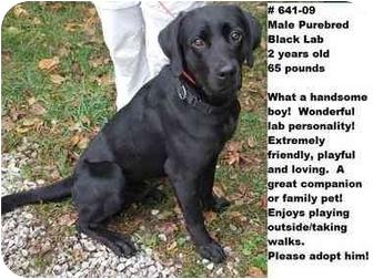 Labrador Retriever Dog for adoption in Zanesville, Ohio - # 641-09 - ADOPTED!