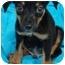 Photo 2 - Australian Shepherd Mix Puppy for adoption in Somerset, Kentucky - Alex (Alfie)